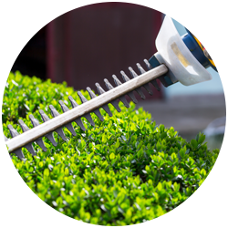 circular image of a hedge being trimmed