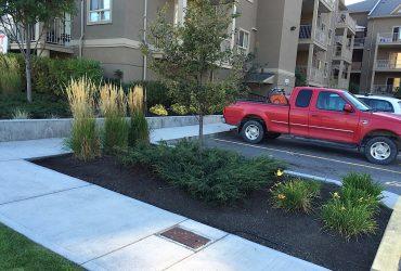 commercial garden of shrubs