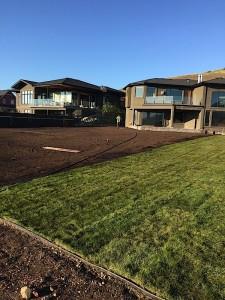 process of installing Sod in a backyard