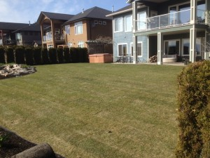 displaying backyard after installing sod