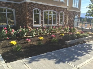 commercial landscaping design in front of a condo building