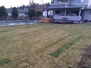 lawn display after a sod installation