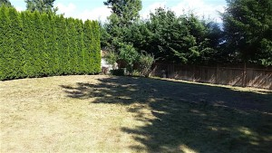 before pictures of a dried up lawn