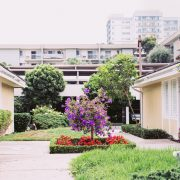 Landscaped courtyard with flowers, shrubs and lawn
